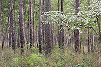,  Big Thicket National Preserve, East Texas, USA