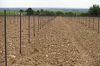 Newly planted vineyard. Chateau de la Soucherie, anjou, Loire, France