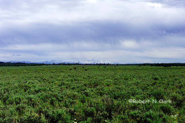 View of the Tetons from Harriman State Park, Idaho