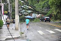 SÃO PAULO, SP - 13.02.2014 - Queda de arvore de grande porte sobre um carro na Rua Amancio de Carvalho em Moema sem vitimas.   (Foto: Adriano Lima / Brazil Photo Press)