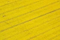 Rapsfeld: DEUTSCHLAND, HAMBURG, VIER- UND MARSCHLANDE, KIRCHWERDER, 05.05.2005: Raps, Baum, Schatten,  Luftbild, Luftaufname, Luftansicht,  Acker, Ackerbau, Ackerland,  Aufsicht, biotope,  bluehen, bluehend, Bluete, Blueten, Bluetenblaetter, Bluetenblatt, Bluetenpflanze, Bluetenpflanzen, Bluetezeit, Blume, Blumen, Blumenblaetter, Blumenblatt, bunt, Deutschland, Draufsicht, Energie, Energieversorgung, Energiewirtschaft, energy industry, Europa, europaeisch, Europe, European, farbenfreudig, farbenfroh, farbenpraechtig, Feld, Felder, gelbe Bluete, gelbe Blueten, Kreuzbluetler, Kronblaetter, Kronblatt, Kronenblaetter, Kronenblatt, Kulturlandschaft, Kulturlandschaften, Kulturpflanze, Kulturpflanzen, Landschaft, Landschaften, Landschaftsarchitektur, Landschaftsbild, Landschaftselement, Landwirtschaft, Lebensraeume, Lebensraum, Luftaufnahme, Luftaufnahmen, Luftbild, Luftbilder, Mitteleuropa, mitteleuropaeisch, Nutzpflanze, Nutzpflanzen, Oelpflanze, Oelpflanzen, Pflanze, Pflanzen, rape field, rape fields, Raps, Rapsanbau, Rapsfeld, Rapsfelder, Rohstoff, Samenpflanze, Samenpflanzen, Umwelt, ungewohnt, Vogelperspektive, Vogelschau (Perspektive), von oben, yellow blossoms, yellow flower, yellow flowers, Bio, Biodiesel, Diesel, Treibstoff, alternative Energie, c o p y r i g h t : A U F W I N D - L U F T B I L D E R . de.G e r t r u d - B a e u m e r - S t i e g  1 0 2,  .2 1 0 3 5  H a m b u r g ,  G e r m a n y.P h o n e  + 4 9  (0) 1 7 1 - 6 8 6 6 0 6 9 .E m a i l      H w e i 1 @ a o l . c o m.w w w . a u f w i n d - l u f t b i l d e r . d e.K o n t o : P o s t b a n k    H a m b u r g .B l z : 2 0 0 1 0 0 2 0  .K o n t o : 5 8 3 6 5 7 2 0 9.C  o p y r i g h t   n u r   f u e r   j o u r n a l i s t i s c h  Z w e c k e, keine  P e r s o e n  l i c h ke i t s r e c h t e   v o r  h a n d e n,  V e r o e f f e n t l i c h u n g  n u r    m i t  H o n o r a r  n a c h  MFM, N a m e n s n e n n u n g und B e l e g e x e m p l a r