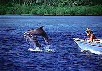The women (MR) on the boat are photographing wild Pacific bottlenose dolphin, Tursiops gilli, Indonesia.