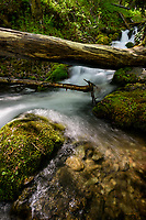Falls Creek wanders below a fallen tree in Alaska's Chugach National Forest just south of Anchorage.
