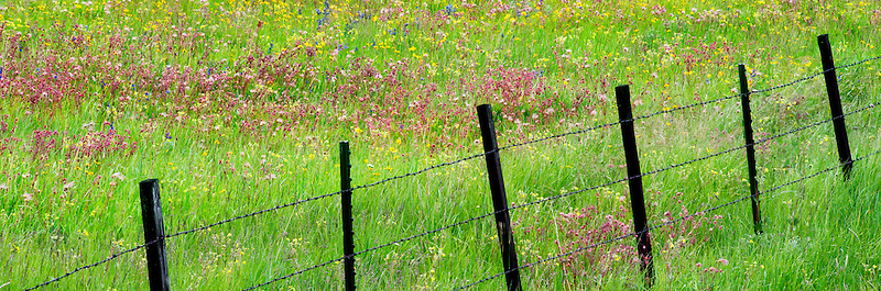 Fence line with wildflowers. Zumwalt Prairie Preserve, Oregon