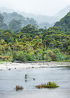 Kohaihai River with native forest, Kahurangi National Park, Buller Region, West Coast, New Zealand, NZ