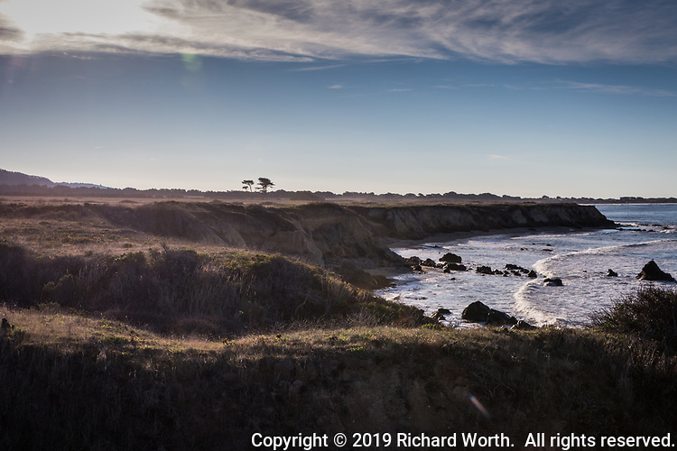 A pair of coastal pines stand watch atop the bluffs on  New Year's Day morning at Año Nuevo State Reserve.