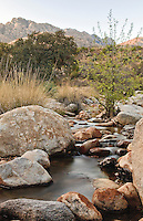 A desert stream in Catalina State Park, in Tucson, Arizona
