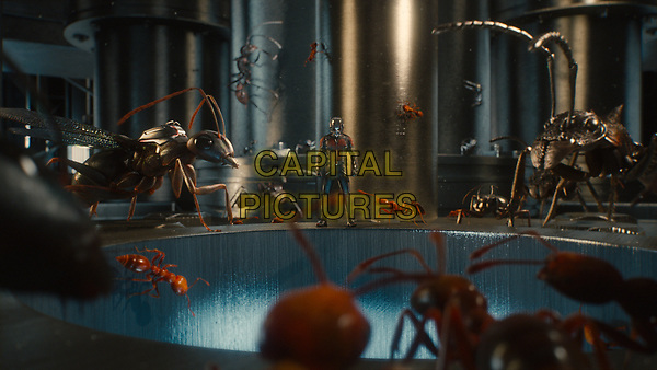 Ant-Man (2015) <br /> Ant-Man/Scott Lang (Paul Rudd) and his ants.<br /> *Filmstill - Editorial Use Only*<br /> CAP/KFS<br /> Image supplied by Capital Pictures