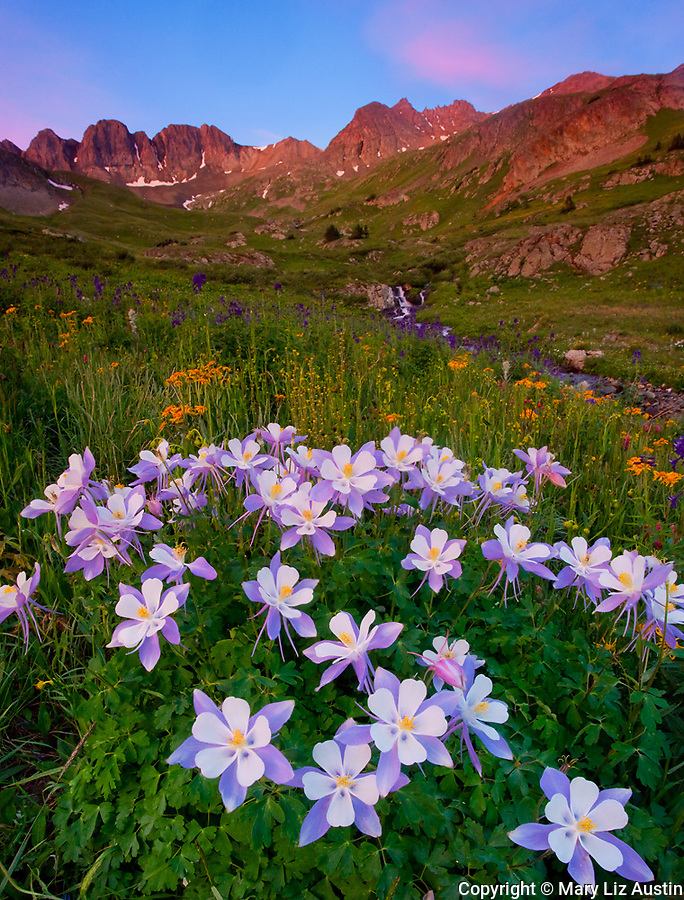 San Juan Mountains, CO<br /> American Basin with Colorado columbine (Aquilegia coerulea) and wildflower meadows beneath Handies Peak at sunrise