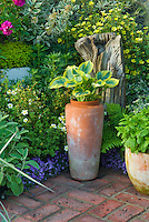Mixed garden plantings, with roses, Potentilla, Sedum, hosta, hydrangea, peony, Salvia,  in container pot, shrubs, ornamental grassevergreens Picea, fence, brick patio