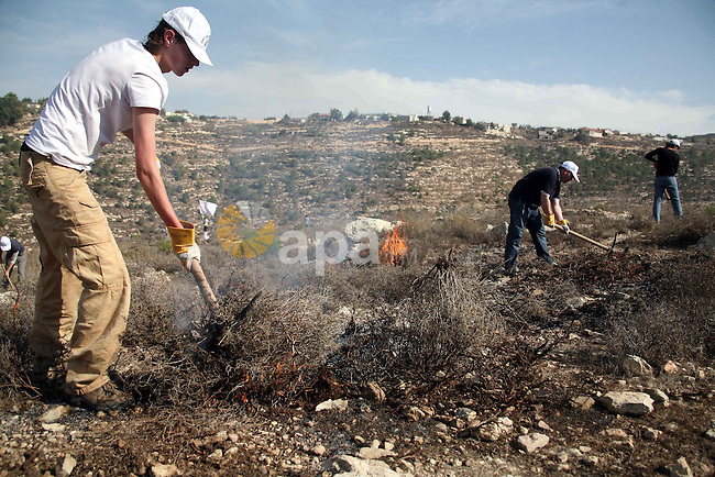 International peace activists help Palestinians as they clear and prepare there lands to be used during a demonstration by Palestinian, Israeli and foreign activists against the demolishing of farm land to be used in the construction of Jewish settlements near the existing Israeli settlement of Bat Ayin near the Palestinian village of Beit Omar, just north of the West Bank town of Hebron on November 13, 2010. Photo by Najeh Hashlamoun