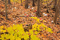 Garbage littering a hardwood forest in autumn<br />Dorset<br />Ontario<br />Canada