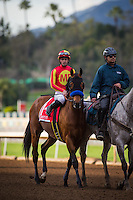 ARCADIA, CA - FEBRUARY 04: Hoppertunity #1, ridden by Flavien Prat wins in the San Antonio Stakes at Santa Anita Park on February 4, 2017 in Arcadia, California. (Photo by Zoe Metz/Eclipse Sportswire/Getty Images)