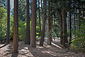 September 2014 / Yosemite National Park landscapes / Woodlands near Cathedral Beach / Photo by Bob Laramie