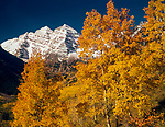 Autumn Aspen,Maroon Bells,Elk Range,Colorado