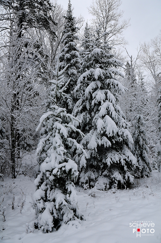 New fallen snow in the Chequamegon National Forest in Northern Wisconsin.