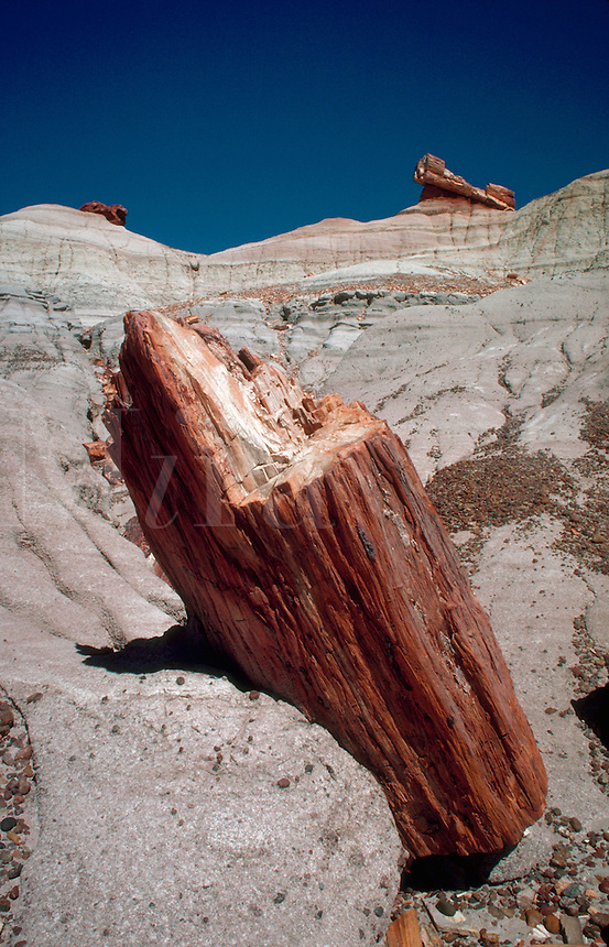 Petrified log in Blue Mesa setting. Petrified Forest National Park, Arizona.