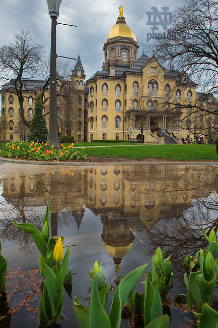 Apr. 13, 2015; Main Building reflected in a puddle. (Photo by Matt Cashore/University of Notre Dame)