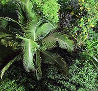 Lush tropical vegetation, Nicoya Penninsuls, Costa Rica