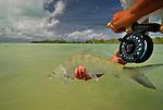 Los Roques Bonefish