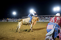 Brahama Bull Riding, Cowtown Rodeo, Salem County, New Jersey