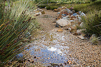 Cloud reflected in water puddle after rain in rock lined drainage swale for rainwater percolation with Juncus (Rush), urban park landscape architecure
