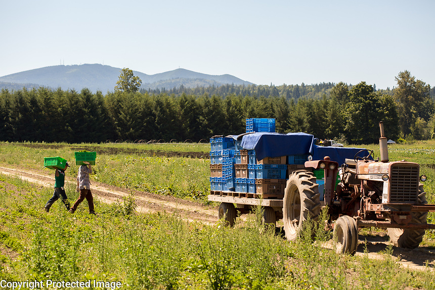 Washington State Dept. of Agriculture, Food Safety, Bridging the Gap