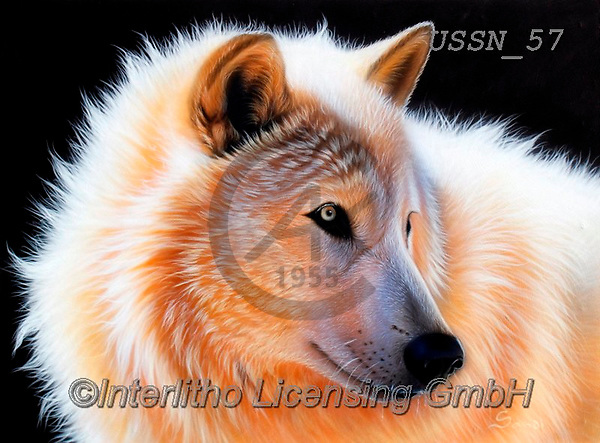 Sandi, REALISTIC ANIMALS, REALISTISCHE TIERE, ANIMALES REALISTICOS, paintings+++++,USSN57,#a#, EVERYDAY ,wolf,wolves ,wolf,wolves ,puzzles