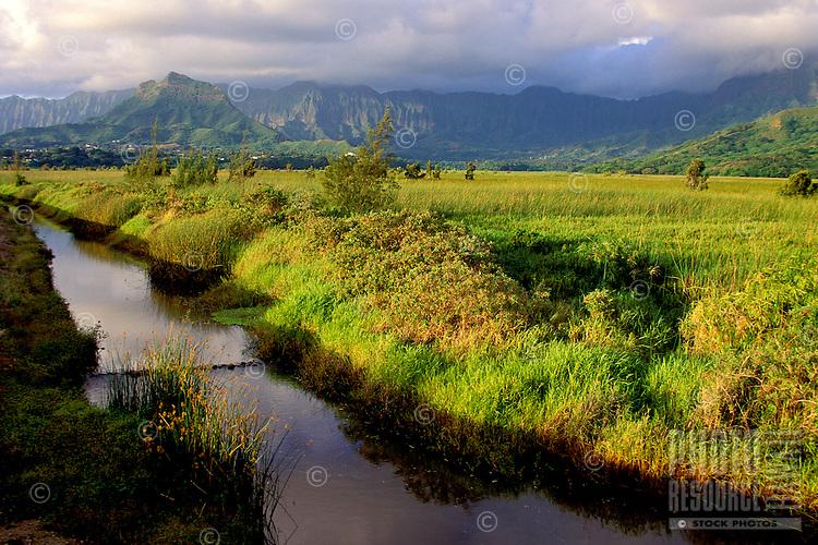 Kawainui Marsh and stream, protected habitat and hiking trail, Kailua, Oahu