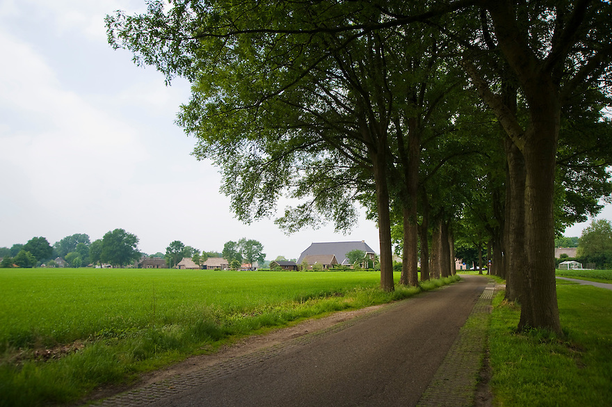 Nederland. Balloo, 1 juni 2008.Drents landschap bij het dorpje Ballo. Smalle weggetjes en bomenrijen.. .Foto (c) Michiel Wijnbergh
