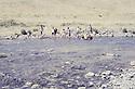 Iraq 1981 <br /> Peshmergas fishing in Hazar  <br /> Irak 1981 <br /> Partie de peche chez les peshmergas