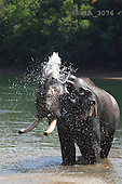 Carl, ANIMALS, wildlife, photos, elephant in water(SWLA3076,#A#)