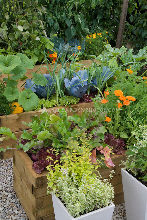 Vegetable And Flower Garden In Raised Beds With Cabbage Squash Lettuces Calendula Tomatoes