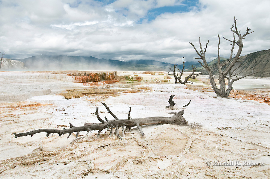 The steaming Upper Terrace, Mammoth Hot Springs, Yellowstone National Park, Wyoming