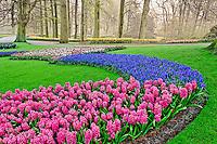 Pattern of Grape Hyacinth, tulips, and Hyacinth spp., Keukenhof Gardens, Lisse, Netherlands