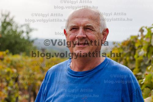 Grape harvest in Etyek, Hungary on September 29, 2012. ATTILA VOLGYI