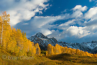 Sunset, Aspen, Populus Tremula, Mount Sneffels, Dallas Divide, Uncompahgre National Forest, Colorado