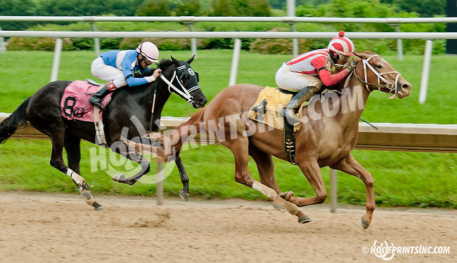 Oro Pequena winning at Delaware Park racetrack on 6/19/14