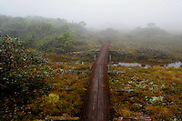 Kilohana Trail board walk.  A wonderful boardwalk that winds through Kauai's bogs to the Kilohana Overlook