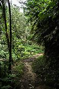 The tropical jungles around Batu Mbelin Quarantine Centre for Orang-utan in Deli Serdang district in Sumatra, Indonesia.