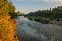 Nisqually River, WA.  Summer morning. This is right across river from Healey Property.