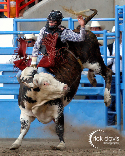 PRCA cowboy Souli Shanklin scores an 83 point ride on Buetler & Son Rodeo Company bull 469 to tie in the round with Mike Moore on July 29, 2008 at the Greeley Independence Stampede Rodeo in Greeley, Colorado.