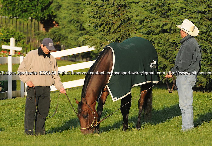 13 May 09:  Trainer D. Wayne Lukas lets Preakness upstart Luv Guv graze after his morning workout at Pimlico Race Course in Baltimore, Maryland
