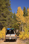 Fall colors road-trip, in Hope Valley, Alpine County, California