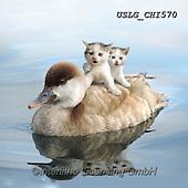 CHIARA,REALISTIC ANIMALS, REALISTISCHE TIERE, ANIMALES REALISTICOS, paintings+++++,USLGCHI570,#A#, EVERYDAY ,photos