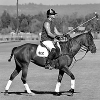 Chukker in Lincoln, CA