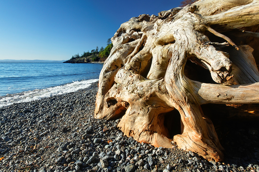 Driftwood on pebble beach, Deadman Bay Preserve, San Juan County Land Bank, San Juan Island, San Juan County, Washington, USA