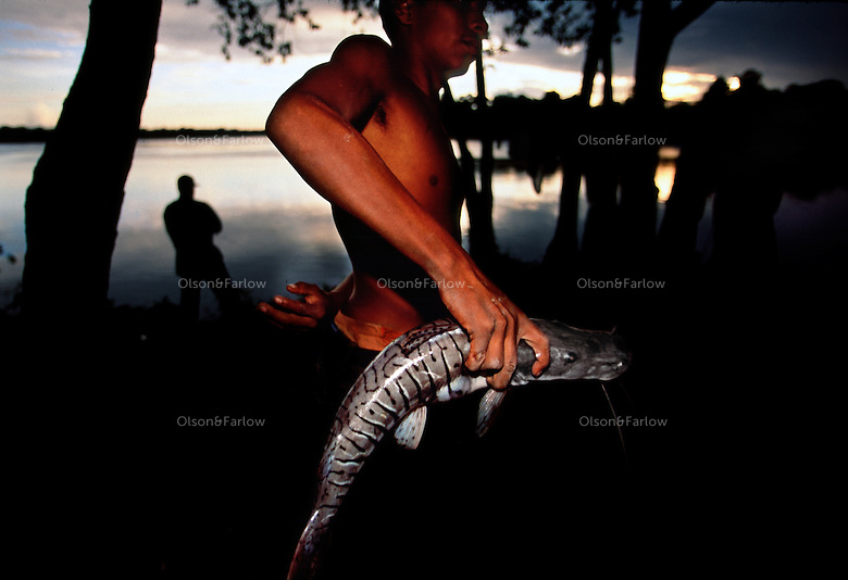 catfish, Rockstone, Guyana.  South America has the greatest diversity of catfish in the world.