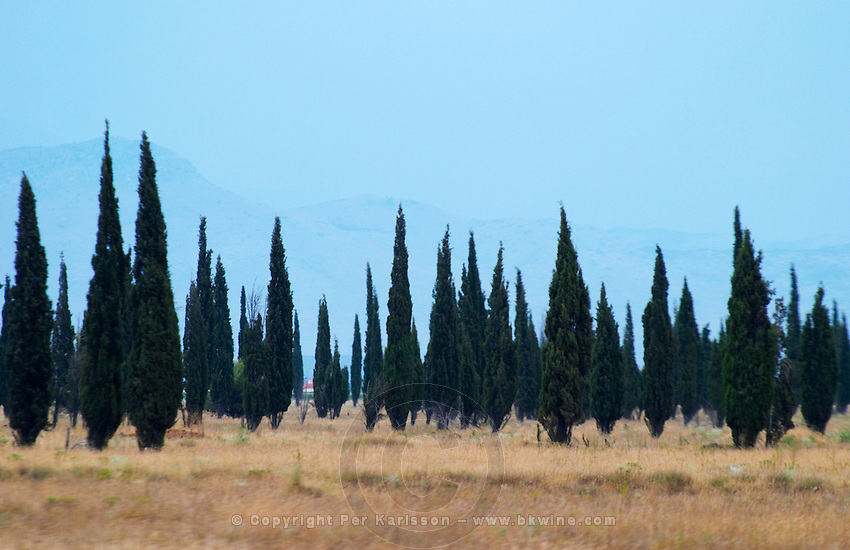 Cypress trees on a dry plain forming a strange pattern, high mountains in the background. Near Podgorica. Montenegro, Balkan, Europe.