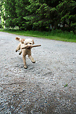 CANADA, Vancouver, British Columbia, a dog runs down the road with a stick in his mouth on Gambier Island, the Howe Sound